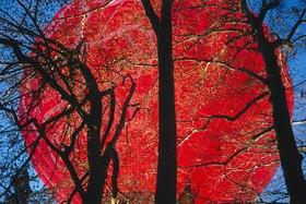Günter Kozeny: Roter Ballon hinter Bäumen