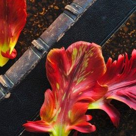 Günter Kozeny: Tulpen; Blütenblätter auf Buch