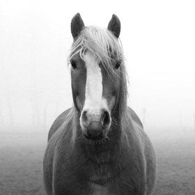 Günter Kozeny: Pferd auf Koppel