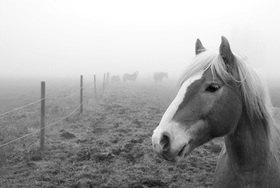 Günter Kozeny: Pferdekoppel im Nebel