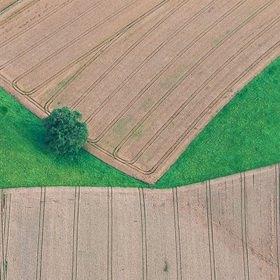 Günter Kozeny: Luftaufnahme, Getreidefeldder mit Wiese und Baum