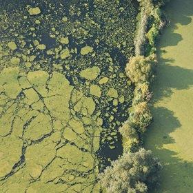 Günter Kozeny: Luftaufnahme, Algen auf Fischteich