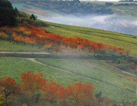 Weinberge in der Nähe von Irancy bei Auxerre, Burgund, Frankreich