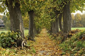 Avenue in the fall, Heinsberg, Germany