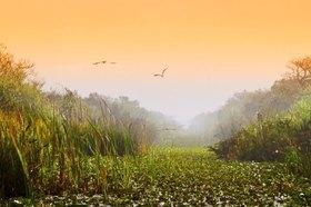 Grasfluss in der Wasserlandschaft, Everglades Nationalpark, Florida, USA
