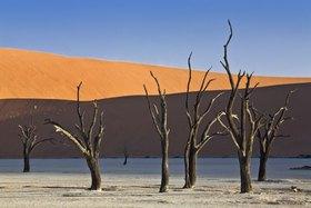 Kameldornbäume in Sossusvlei, Namib Naukluft Park, Namib Wüste, Namibia