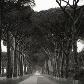 Treelined road, Maremma, Provinz Grosseto, Toskana, Italien