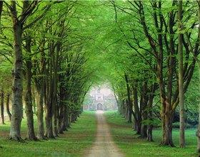 Cranborne Manor House, treelined avenue, England, England, Vereinigtes Königreich