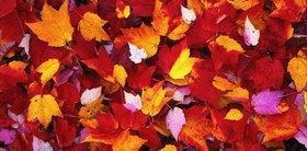 Fallen leaves, Vermont, Vereinigte Staaten, USA