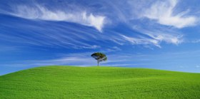 Tree in a green field, Chianti, Toskana, Italien