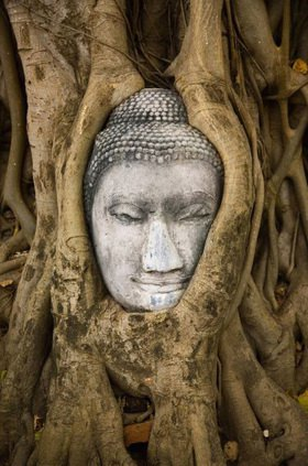 Wat Mahathat, Buddha head in tree roots, Ayutthaya, Thailand