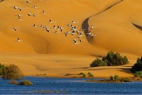 Desert and laguna around the city, migratory birds, Former Spanish Sahara, Südmarokko, Marokko