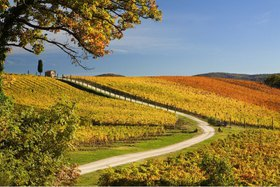 Vineyards, Greve in Chianti, Toskana, Italien