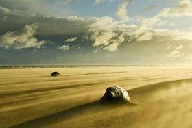 Robben am Strand, North Somercotes, Lincolnshire, Großbritannien, Vereinigtes Königreich