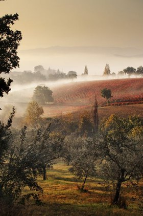 Fog on the hills near Montefalco in the morning, Provinz Perugia, Umbrien, Italien