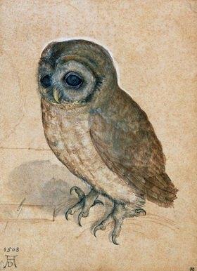 Albrecht Dürer: Kaeuzchen. Aquarell/Zeichnung