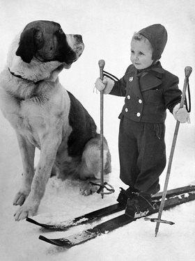 Zwei gute Skikameraden. Photographie
