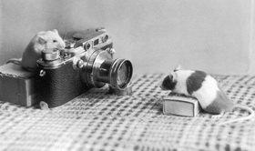 Eine Maus, Leica Photoapparat,Photogaph, Photographie. Um 1930.