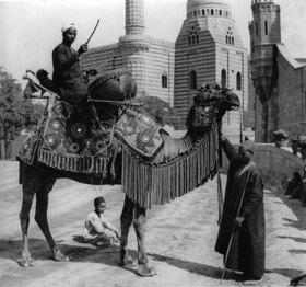 Arabischer Hochzeitsmusikant auf einem reichgeschmückten Kamel reitet vor dem Brautzug. Photographie