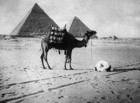 Das Kamel und der Gläubige. Ein im Sand Betender vor dem Hintergrund der Pyramiden. Photographie