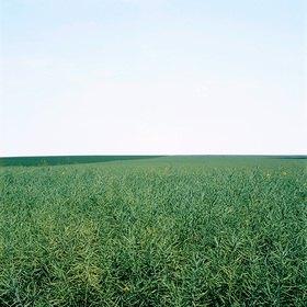 Jana Hiller: Landschaft I