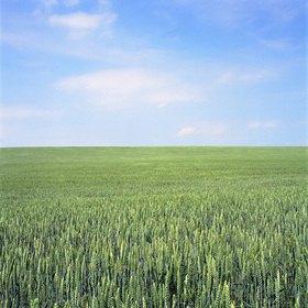 Jana Hiller: Landschaft VI