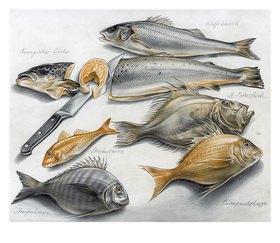 Reinhard Michl: Stilleben, Fische