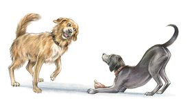 Reinhard Michl: Hunde