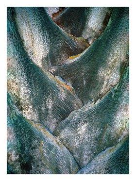 Suse Güllert: Palme