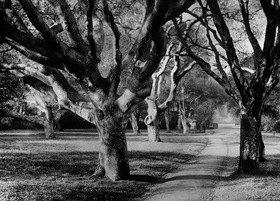Gebrüder Haeckel: Parkanlage der University of California at Berkeley -