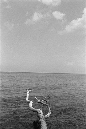 Ursula Zeidler: Abgestorbener Baumstamm am Wasser